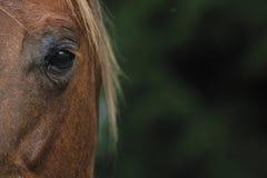 Occhio di Hors Fotografia Stock