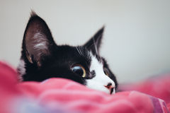 Occhio di seduta di giallo del gatto nero Immagini Stock Libere da Diritti