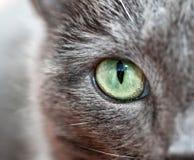 Occhio di Smokeys Immagini Stock