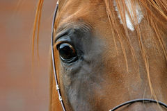 Occhio di un cavallo immagine stock libera da diritti