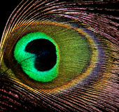 Occhio di un pavone Fotografia Stock Libera da Diritti