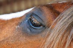 Occhio di una fine marrone del cavallo su Fotografie Stock Libere da Diritti