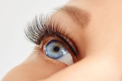Occhio femminile con le sferze lunghe estreme dell'occhio falso Estensioni del ciglio, trucco, cosmetici, bellezza fotografie stock libere da diritti