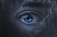 Occhio fra gli alberi Immagini Stock Libere da Diritti