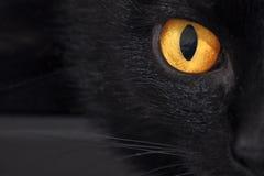Occhio giallo del gatto nel nero Fotografie Stock Libere da Diritti