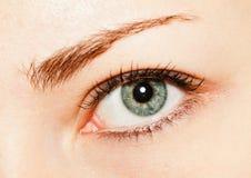 Occhio grigio Fotografia Stock