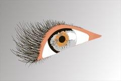 Occhio grigio Immagine Stock