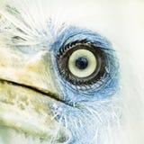 Occhio a macroistruzione dell'uccello Fotografia Stock Libera da Diritti