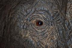 Occhio mastodontico Fotografia Stock Libera da Diritti