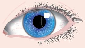 Occhio sinistro blu umano fotografia stock
