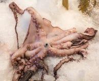 Occhio sul polipo Immagini Stock Libere da Diritti