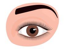 Occhio umano di marrone del front_A del fronte Fotografia Stock Libera da Diritti