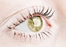 Occhio umano nocciola. fotografia stock
