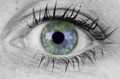 Occhio variopinto Fotografie Stock Libere da Diritti