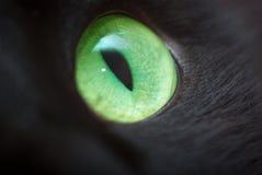 Occhio verde. Fotografia Stock