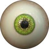 Occhio verde Immagine Stock