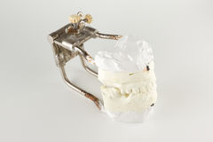 Occludator with plastered dentition models Royalty Free Stock Photography