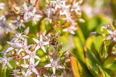 ` Occupé comme ` 2-4 d'abeille Images libres de droits