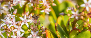 ` Occupé comme ` 2-8 d'abeille Images stock