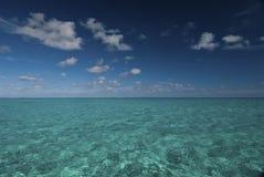 Oceânico Imagens de Stock