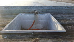 Oceaan de schalengootsteen van scènevissen Royalty-vrije Stock Afbeeldingen