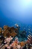 Oceaan en vissen royalty-vrije stock fotografie