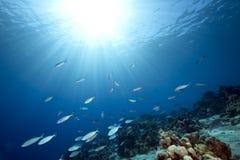 Oceaan en vissen stock afbeelding