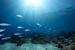 Oceaan en vissen royalty-vrije stock afbeeldingen