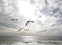 Oceaan en Vogels Royalty-vrije Stock Afbeelding