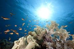 Oceaan, koraal en vissen stock foto