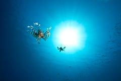 Oceaan, lionfish en zon Stock Foto