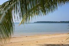 Oceaan mening en palmtree Stock Foto