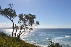 Oceaan-mening-met-a-boom-in-de-voorgrond stock fotografie