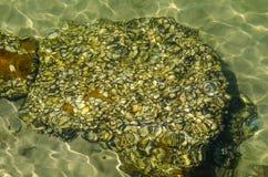 Oceaan ondiep water met de rotsachtige oppervlakte van het kust onderwater tonende abstracte patroon royalty-vrije stock foto's