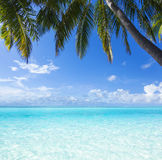 Oceaan, palm, paradijs Royalty-vrije Stock Foto