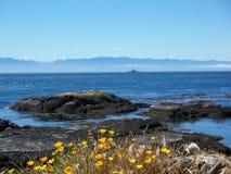 Oceaan rotsen met wilde bloemen Stock Afbeeldingen
