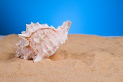 Oceaan shells stock foto