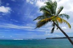 Oceaan strandscène met een palm Stock Afbeeldingen