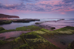Oceaan Vastgestelde Roze Groen Narrabeen Royalty-vrije Stock Afbeelding