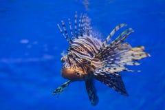 Oceaan vissen Royalty-vrije Stock Afbeelding