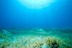 Oceaan, zon en vissen royalty-vrije stock foto