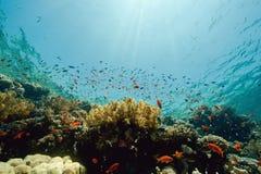 Oceaan, zon en vissen Royalty-vrije Stock Foto's