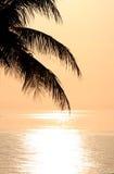 Oceaan zonsondergang en palm Royalty-vrije Stock Afbeeldingen