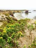 Oceaanbloemen in Morro-Baai Stock Afbeeldingen