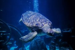 Oceaanelegancy stock foto's