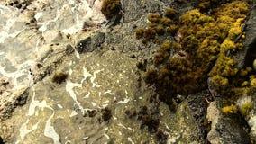 Oceaangolven die omhoog op Rotsen met Gele Installaties wassen stock footage