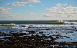 Oceaangolven die op een zonnige dag met surfers breken die kelp tenietdoen Stock Foto
