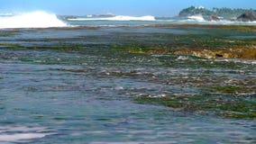 Oceaangolvenbroodje op koraalriffen met zeewier dichtbij kustlijn stock video
