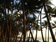 Oceaanmening en palmen Stock Foto