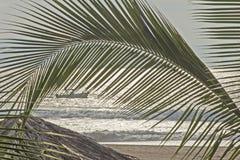 Oceaanstrand met palmblad Royalty-vrije Stock Foto